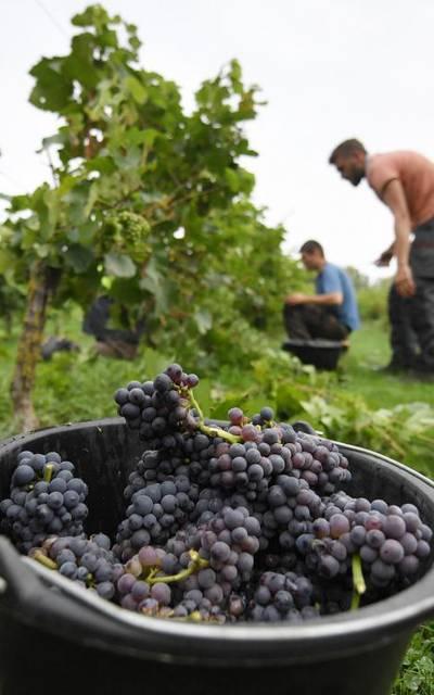 Le vignoble de Valenciennes